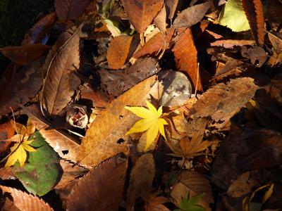 耶馬溪で紅葉狩り